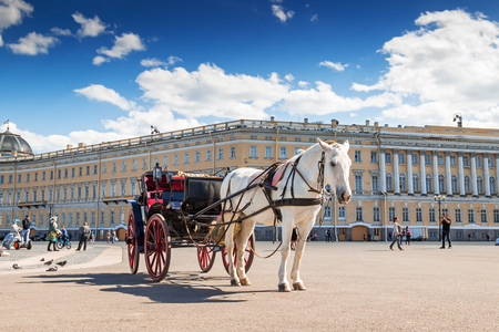 SAINT PETERSBURG, RUSSIA - MAY 25, 2015: White horse with carriage on Palace square in Saint Petersburg, Russia.