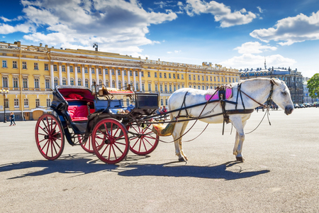 SAINT PETERSBURG, RUSSIA - MAY 25, 2015: White horse with vintage carriage on Palace square in St Petersburg, Russia.