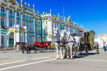SAINT PETERSBURG, RUSSIA - MAY 25, 2015: White horses with carriage on Palace square in Saint Petersburg, Russia.