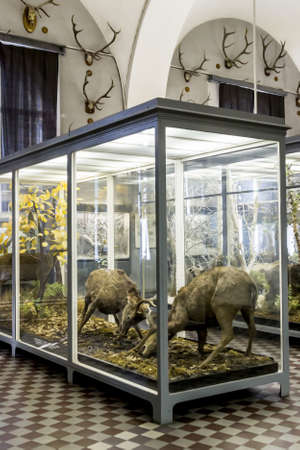 st petersburg: SAINT PETERSBURG, RUSSIA - MAY 28, 2015: Mammal animals in Zoological Museum of the Zoological Institute of the Russian Academy of Sciences in St. Petersburg, Russia.