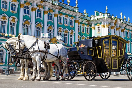 SAINT PETERSBURG, RUSSIA - MAY 25, 2015: White horses with royal carriage on Palace square in Saint Petersburg, Russia.