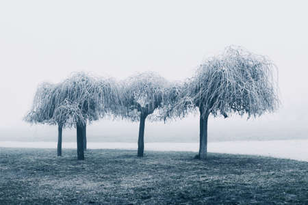 Mist in the park.