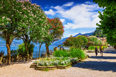 Walking path with trees in Bellagio, Como lake, Italy.