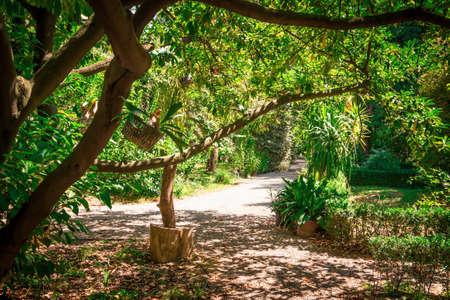 Old historical botanical garden in Parma, Emilia-Romagna, Italy. Stock Photo