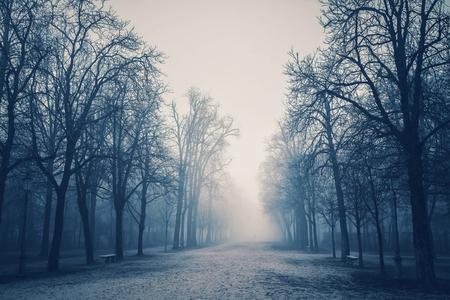 Misty park in Parma, Emilia-Romagna, Italy.