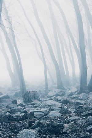 Mist in silent forest. Woods in the fall. Stock Photo