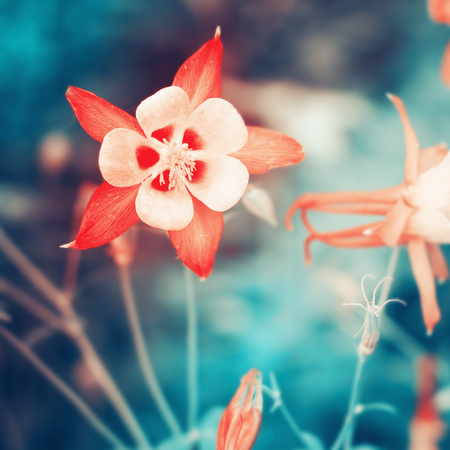 Beautiful flower background. Colorful filter. Stock Photo
