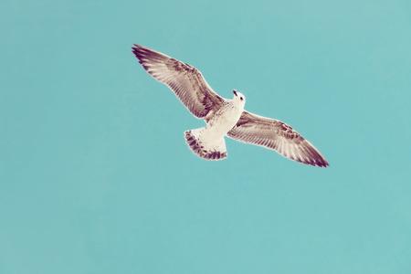 Seagull flying in the sky. Wild bird. Stock Photo - 94213572