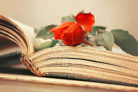Open old book with rose flower