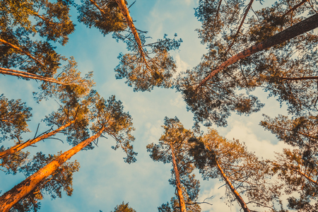 Trees over blue sky. Nature background