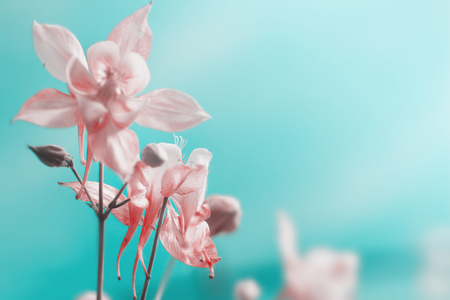 Floral pastel beautiful background with pink flowers over blue sky