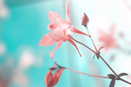Floral pastel background with pink flowers. Nature beauty