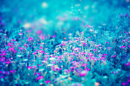 Beautiful pink flowers, nature blue abstract background