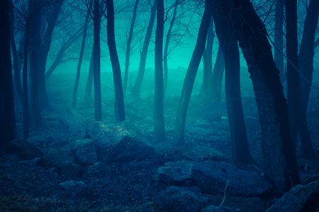 Misty forest. Autumn nature foggy landscape