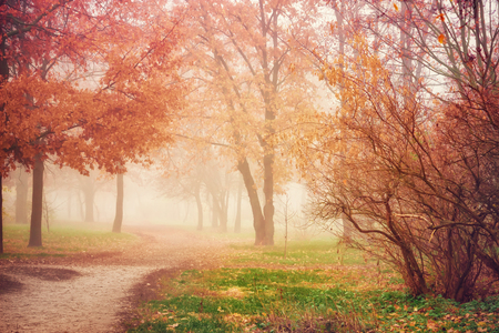 Autumn mist in forest. Trees with orange and red foliage. Empty footpath in park. Autumn scenic landscape Foto de archivo - 115986421