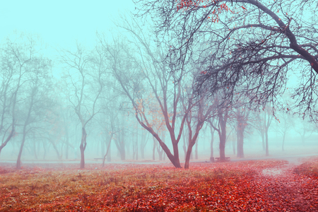 Scenic landscape of autumn foggy weather in park. Trees with red leaves in mist Foto de archivo - 115986424