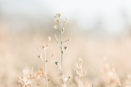 Tiny plant and grass background with copy space. Summer nature landscape. Pastel colors.