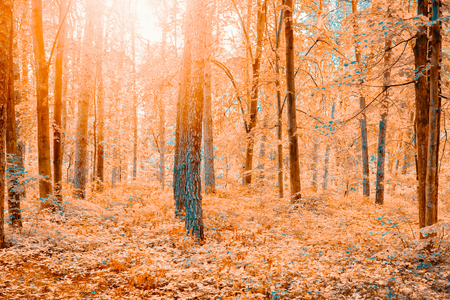 Beautiful forest landscape in autumn. Nature fall scenery