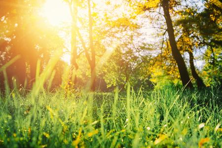 Summer nature landscape at sunset