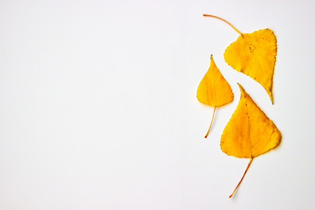 Autumn yellow leaves on white background with copy space. Nature concept, flat lay view. Standard-Bild