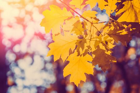 Autumn tree leaves. Nature colorful seasonal background. Standard-Bild