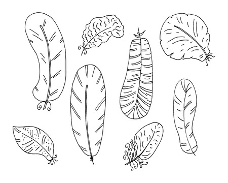 Hand drawn boho feathers set. Design elements collection. Vector illustration