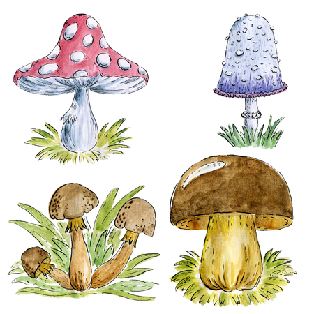 Hand drawn watercolor set mushroom. botanical illustration isolated on white background.