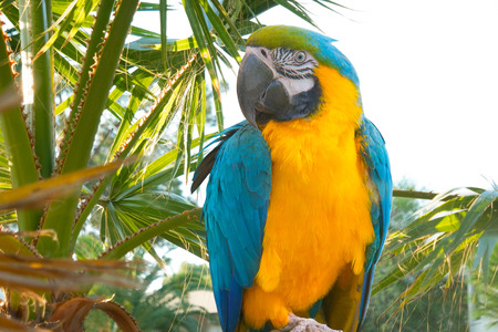 parrot ara sits on a branch