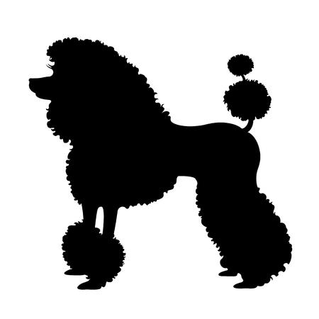 Purebred poodle dog, elite poodle vector illustration.