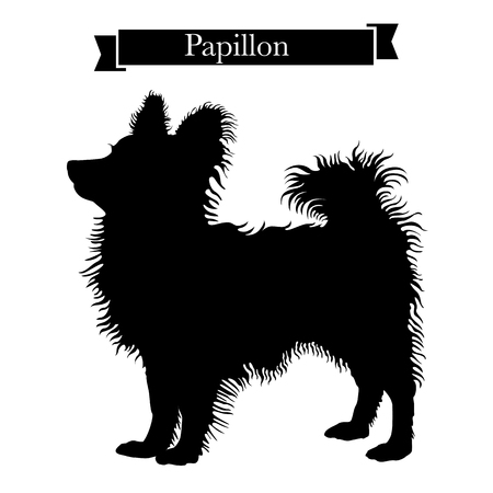 Dog breeds - Purebred papillon or continental toy spaniel dog. Vector Illustration