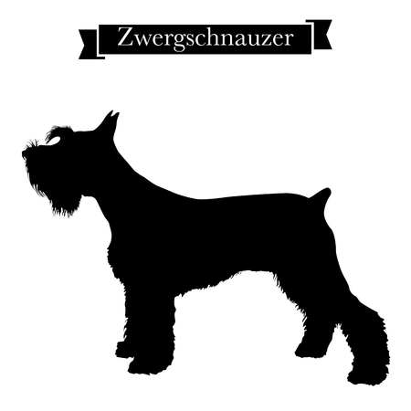 Dog breeds - Purebred zwergschnauzer or miniature schnauzer dog. Vector Illustration