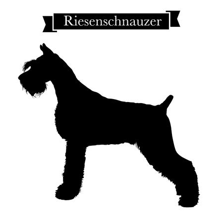Dog breeds - Purebred riesenschnauzer or giant schnauzer dog. Vector Illustration