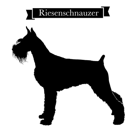 Dog breeds - Purebred riesenschnauzer or giant schnauzer dog. Vector Illustration