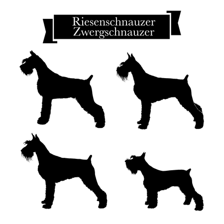 Dog breeds - Set of purebred riesenschnauzer and zwergschnauzer. Giant and miniature schnauzer dogs. Vector Illustration