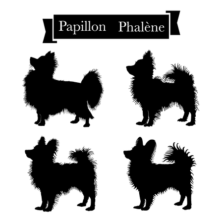Dog breeds - Set of purebred papillon or continental toy spaniel and phalene dogs. Vector Illustration