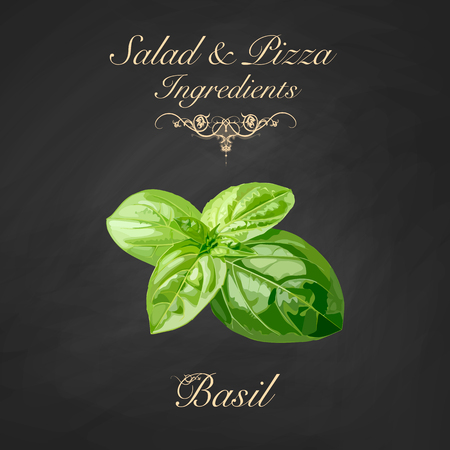 Salad and pizza ingredients - basil. Vector Illustration