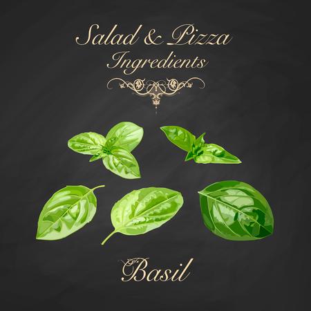 Salade en pizza-ingrediënten - basilicum. Vector illustratie