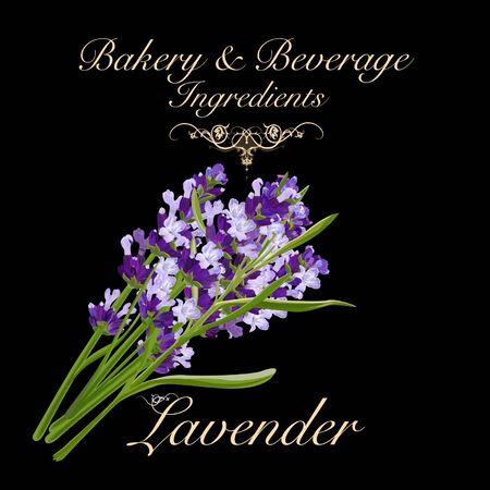 Bakery and beverage ingredients - lavender. Vector Illustration