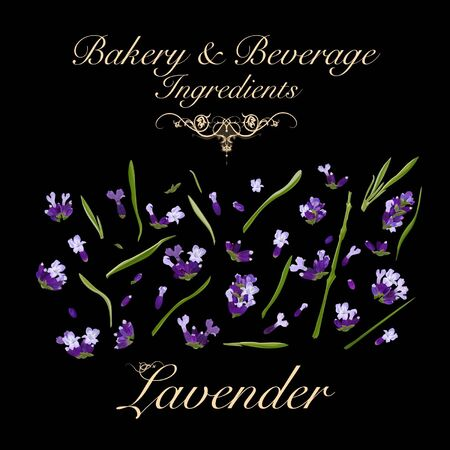 Bakery and beverage ingredients - lavender. Vector Illustration