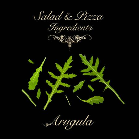 Salad and pizza ingredients - arugula. Vector Illustration
