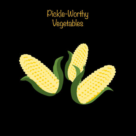 Pickle-worthy vegetables - whole corn ears. Vector Illustration