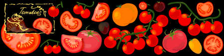 Tomatoes background. Varieties including yellow and cherry tomatoes. Vector Illustration