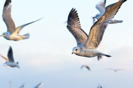 sea seaport: Seagull Stock Photo