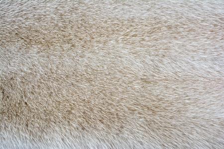 visone: pelliccia di visone brillante. pelliccia texture.