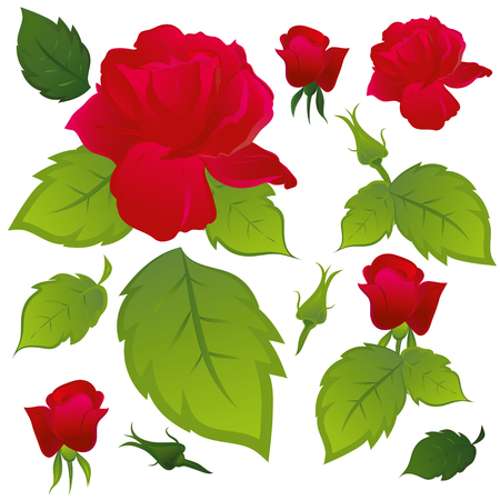 Red roses with green leaves. Part of the pattern. Isolated, white background.