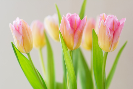 variegated: Bouquet of spring flowers, pink and yellow tulips.