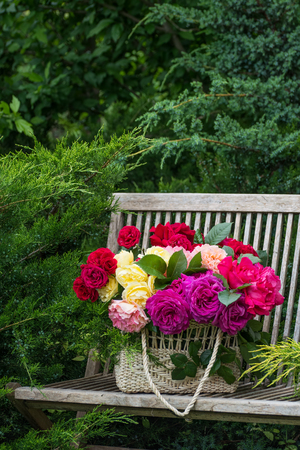 variegated: Basket with multi-colored roses on a bench in the summer garden. Stock Photo