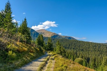View of the Hoverla mountain, Carpathian Mountains, Ukraine, coniferous forest. Autumn mountain landscape on a clear, sunny day.