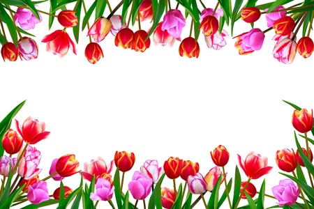 Bouquet of spring fresh flowers, tulips with multi-colored petals. Isolated, white background. Stock Photo