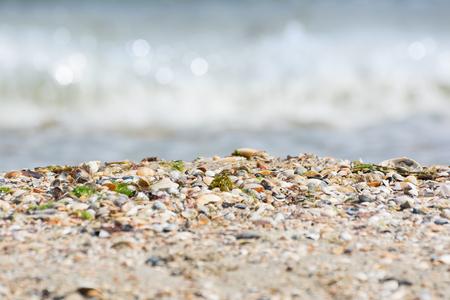 Seashells on a sandy beach near the sea, summer sunny day. Sea wave.